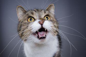 Mon chat a mauvaise haleine : que dois-je faire ?