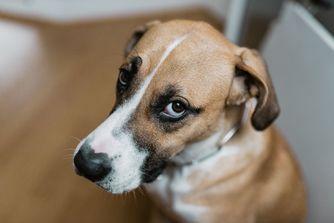 Comment prendre soin des yeux du chien ?