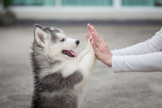 Quels soins quotidiens pour votre chien ?