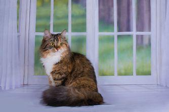 Vivre avec un chat en appartement