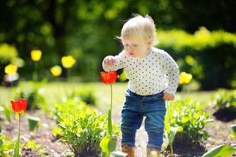 Gare aux plantes toxiques pour bébé !