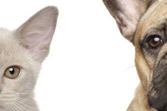 Etes-vous plutôt chien ou chat ?