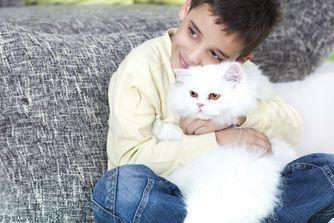 Prendre soin de son chat en vidéo