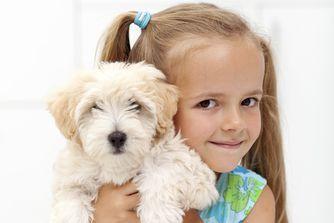 Prendre soin de son chien en vidéo