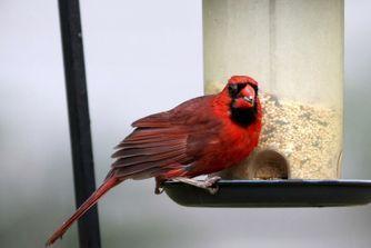 Les aliments à ne pas donner à votre oiseau