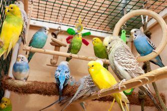 Les principales espèces d'oiseaux domestiques