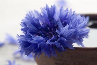 Eaux florales et beauté naturelle