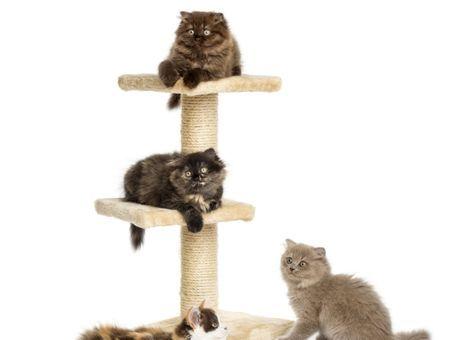 Arbre à chat : où votre chat peut-il se faire les griffes ?