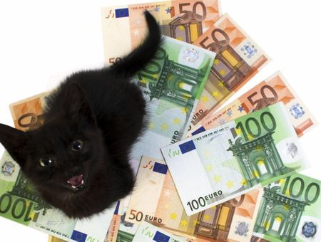 Quel budget faut-il prévoir pour un chat ?