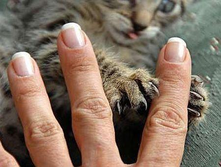 Troubles du comportement du chat