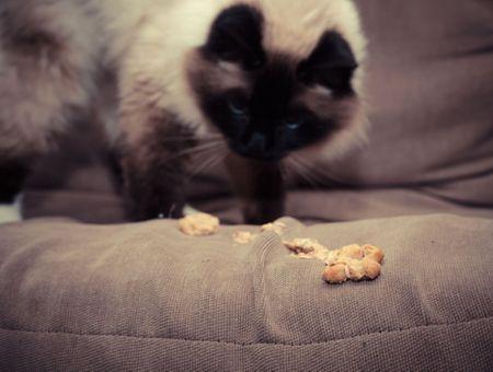 Mon chat vomit