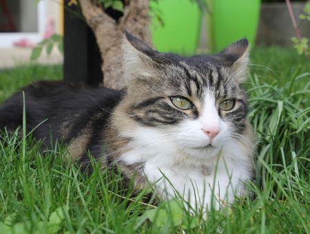 Soins du chat