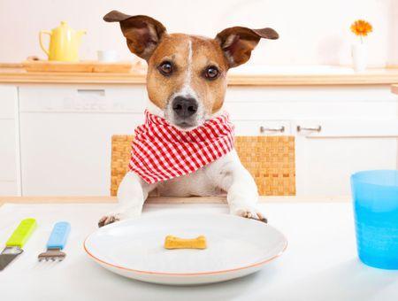 Les besoins nutritionnels du chien