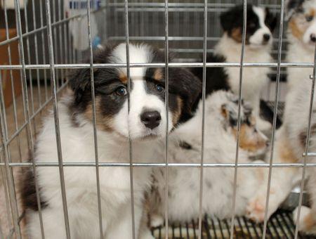 Achat d'un chien : que faire en cas de litige ?