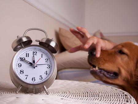 Mon chien se réveille en pleine nuit : que faire ?