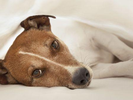 Comment savoir si mon chien est malade?