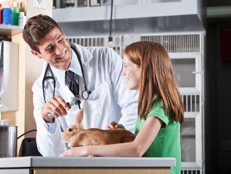Les traumatismes des oreilles du lapin: origines et soins