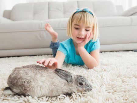 Apprendre à votre lapin à utiliser son bac à litière