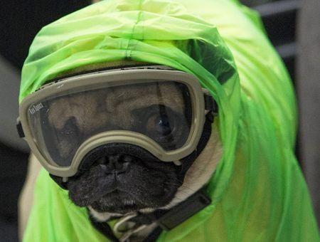 Harley, le chien thérapeute qui soulage le stress des médecins mexicains