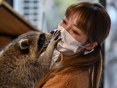 """Iguane ou raton laveur ? Boom du """"café animalier"""" exotique en Chine"""