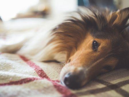 Le gouvernement veut lutter contre l'abandon des animaux de compagnie