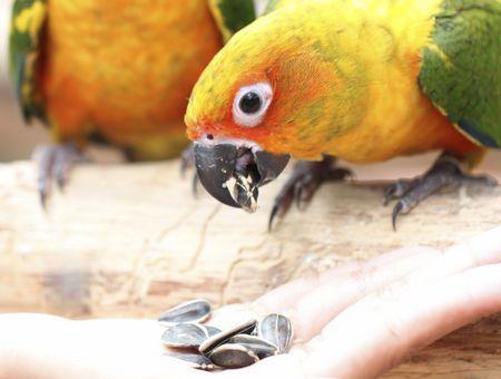 Alimentation des oiseaux