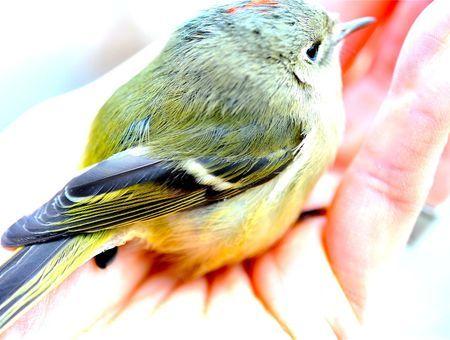 Oiseau blessé : les fractures chez l'oiseau