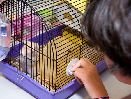 Bien accueillir un hamster : les éléments indispensables