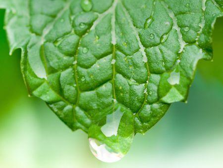 L'eau florale de menthe, pour votre peau