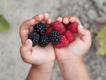 Les fruits dans l'alimentation de bébé