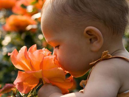 Le développement de l'odorat de bébé