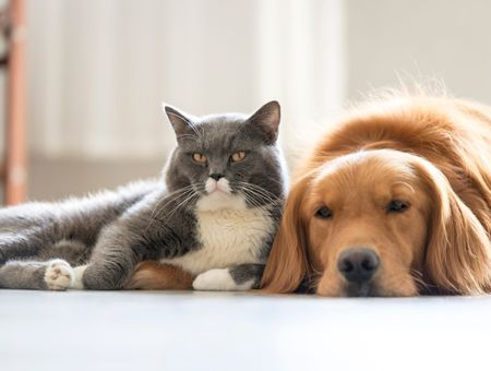Allergies dues aux animaux
