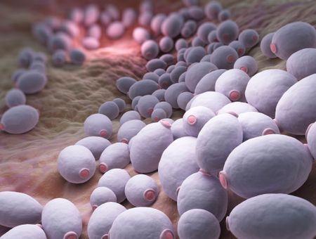 Candida albicans : symptômes et traitements