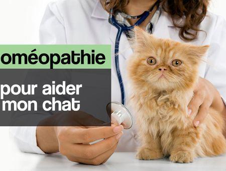 L'homéopathie pour aider mon chat