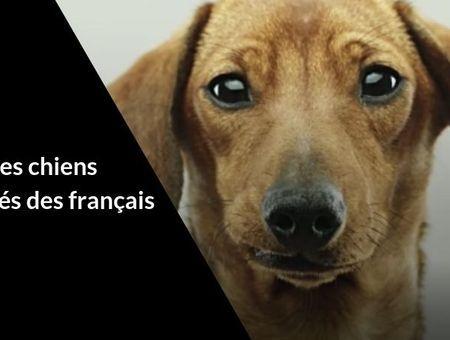 Classement des chiens préférés des français