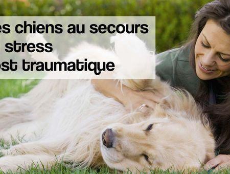 7 races de chien pour les victimes de stress post-traumatique