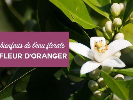 Beauté : les bienfaits de l'eau florale de fleur d'oranger
