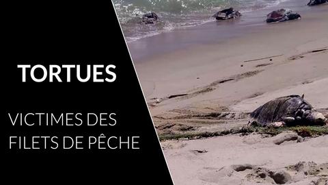tortues-pêche