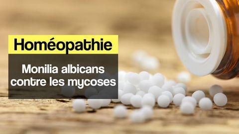 monilia albicans mycose