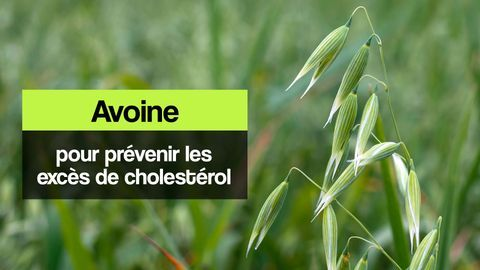 avoine cholesterol