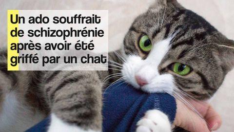 schizophrénie griffure chat