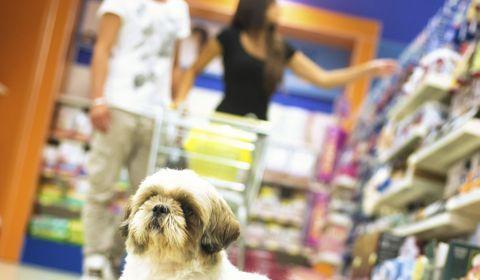 étiquettes des produits pour chien
