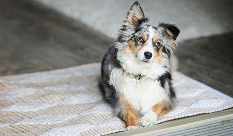 Les adoptions de chiens et chats choisis sur Internet, un succès pour la SPA