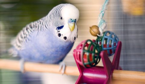 jouets pour oiseaux