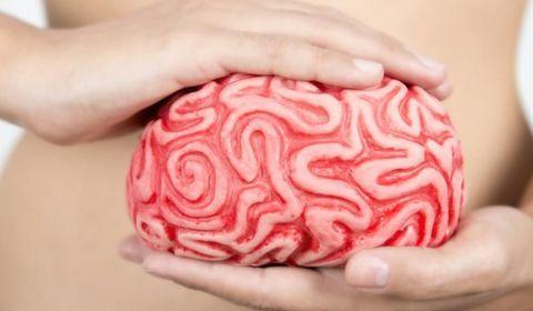 Intestin deuxième cerveau