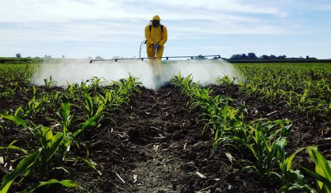Pesticides : de plus en plus utilisés en France