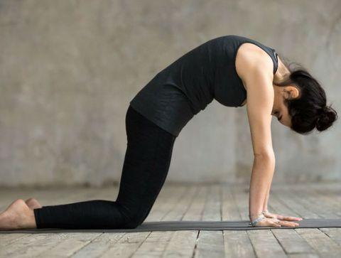 Dos rond (position du chat) - Stretching : 25 étirements pour débutants