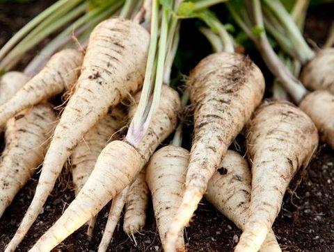 Le panais – Doctissimo -Décembre : fruits, légumes et ...
