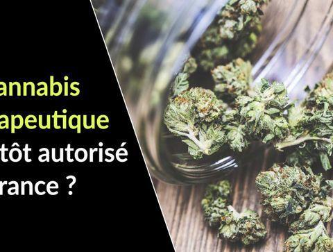 Le cannabis thérapeutique bientôt autorisé en France ?