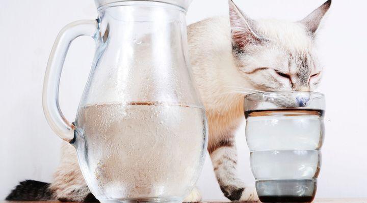 boire pour un chat